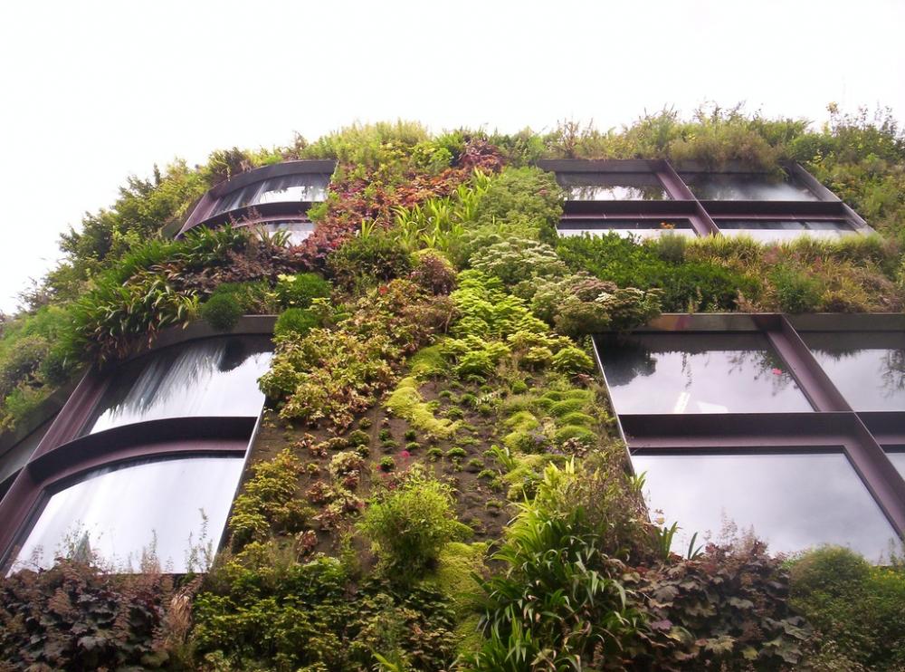 Muros verdes plataforma arquitectura for Muros verdes arquitectura