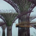 En Construcción: Gardens by the Bay + Supertrees / Wilkinson Eyre + Grant Associates (11) © Bronte Cullum